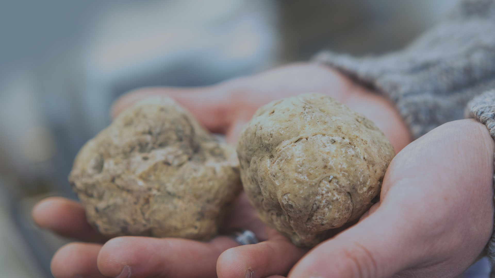 Morra Tartufi ad Alba - Online store of fresh truffles and truffle products of Alba
